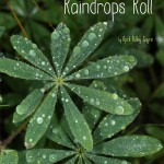 Poetry as Mentor Texts: Raindrops Roll by April Pulley Sayre