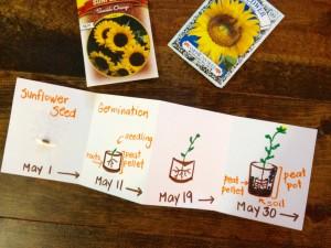 seed timeline